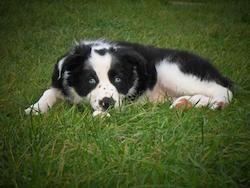 Aggressive puppy training