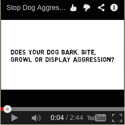 how to train an aggressive puppy