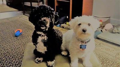 Riley, black and AJ white