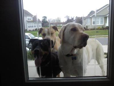 Brave (left), Tucker (back/middle), and Logan (right)