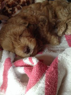 bentley is 8 weeks old